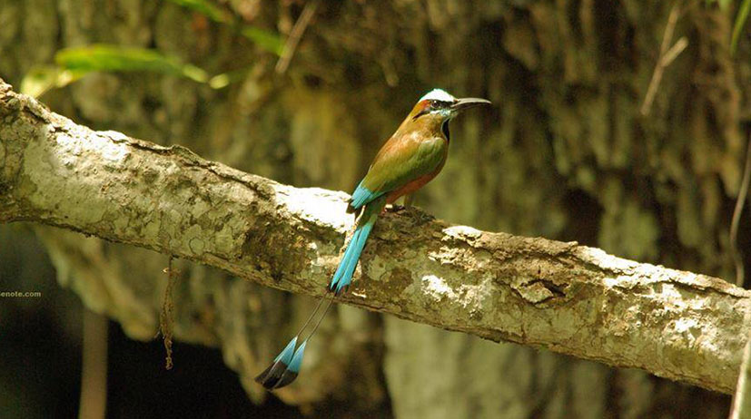 Bird Yucatan Peninsula